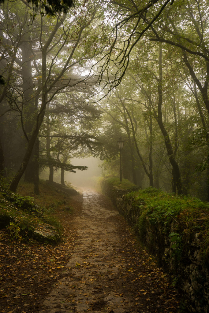 A forest in San Marino