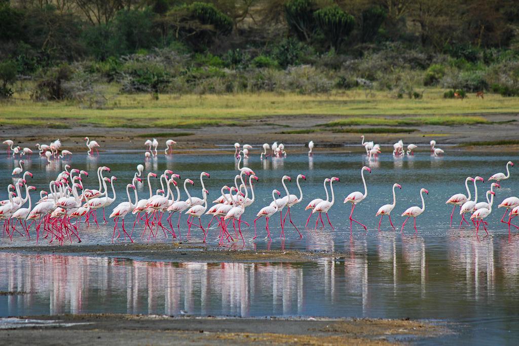 Lake Elmenteita, Kenya