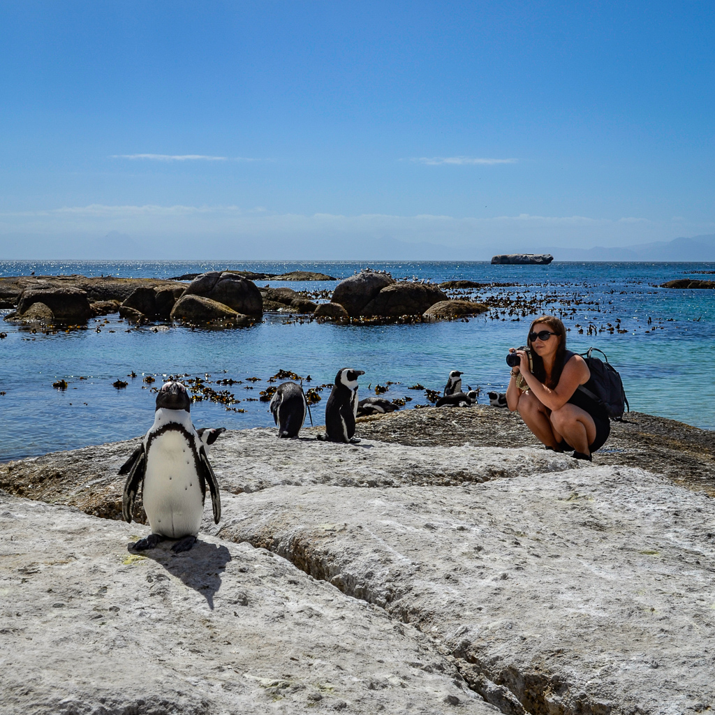 Boulders Beach and the Penguins