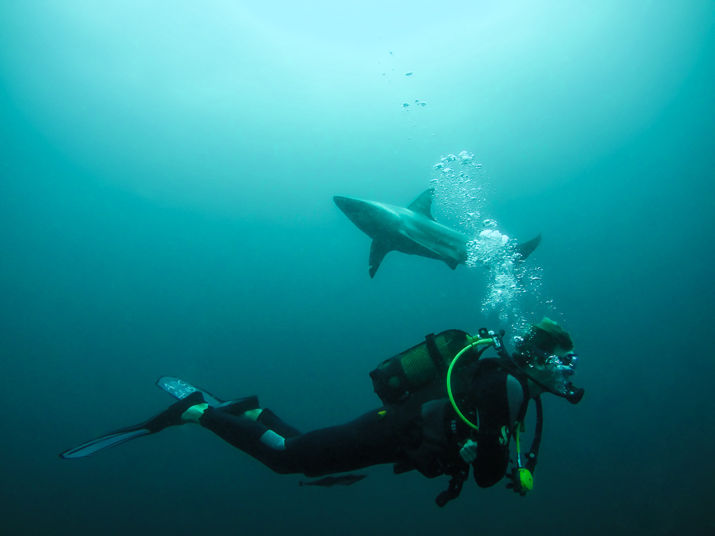 Baited Shark Dive, Umkomaas, South Africa