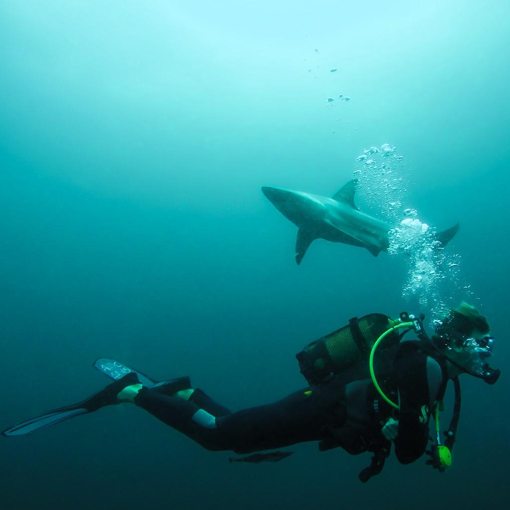 Shark Diving in Umkomaas, South Africa