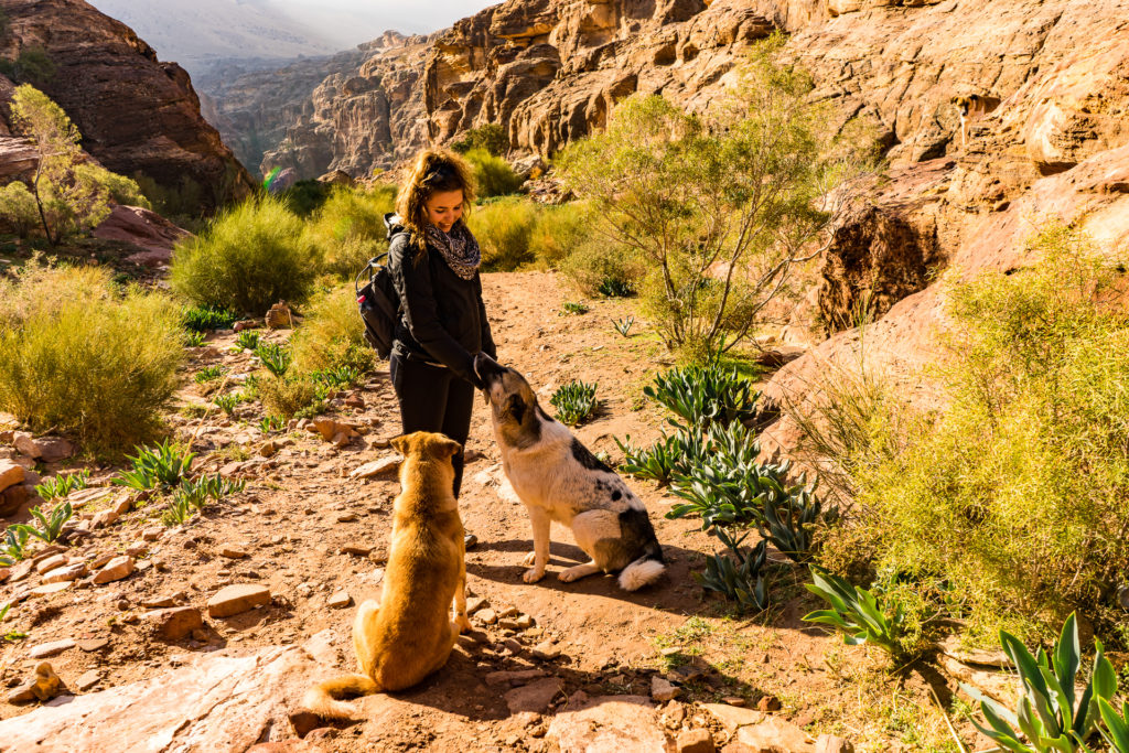 The dogs of Petra, Jordan