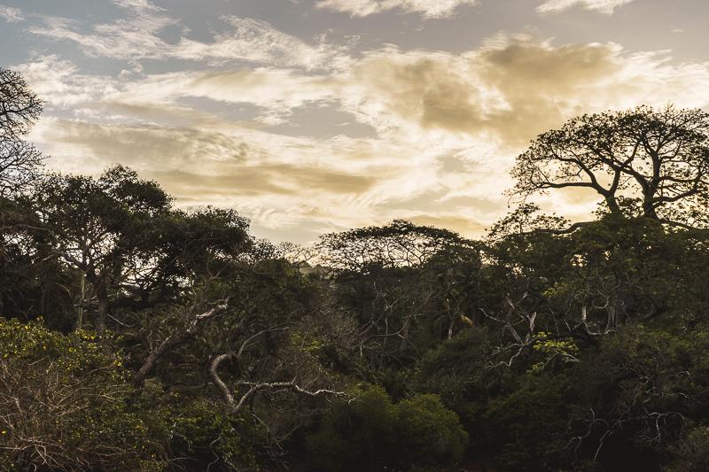 Nature in Moheli, Comoros