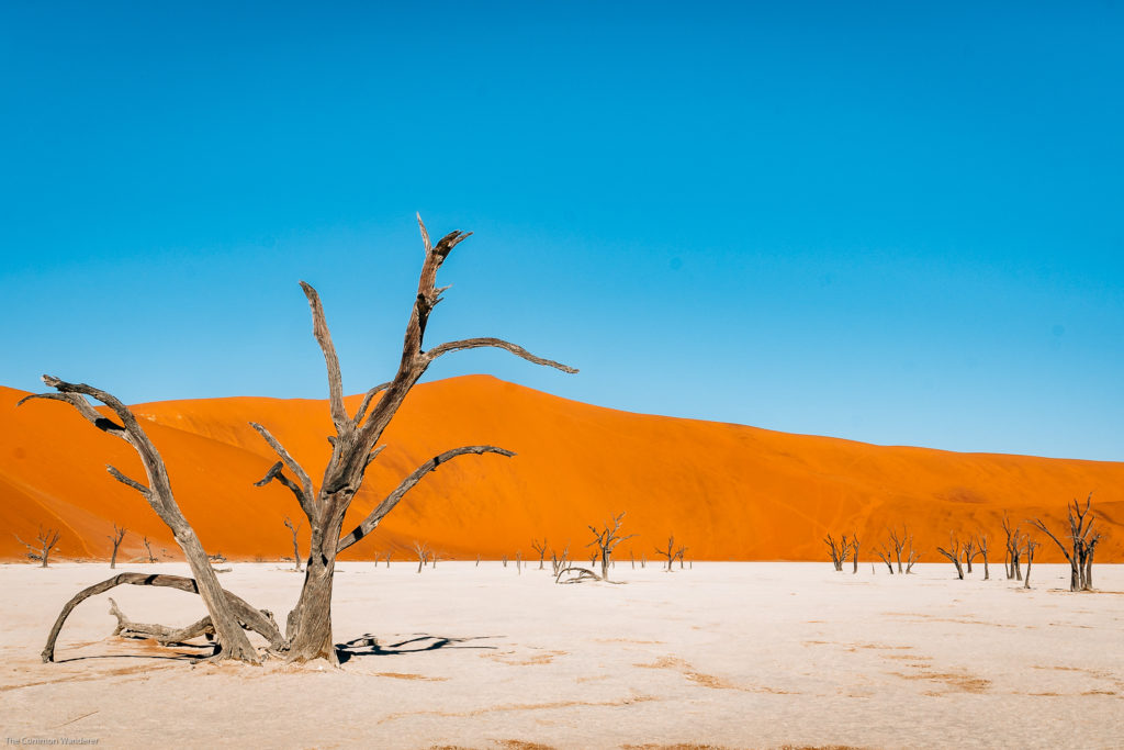 The iconic Deadvlei clay pan, Sossusvlei, Namibia.