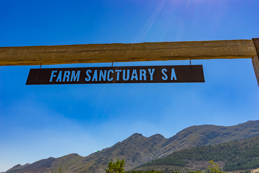 Animal sanctuary, Farm Sanctuary SA, Franschhoek, South Africa