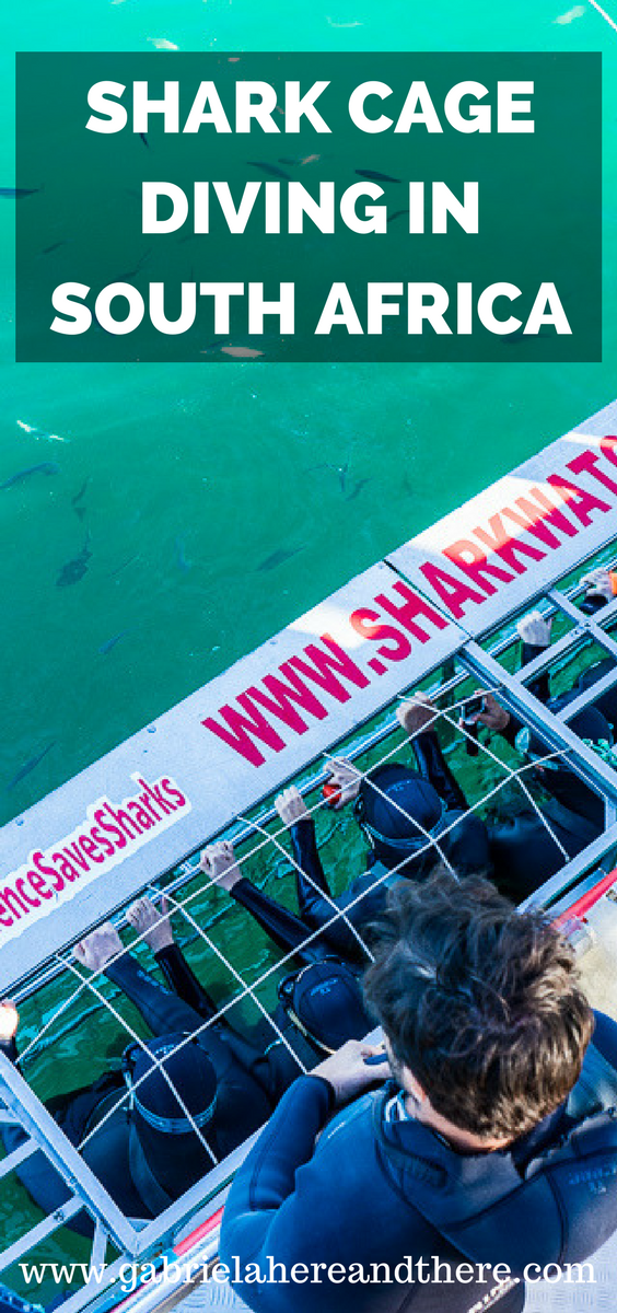 Shark Cage Diving in Gansbaai, South Africa, with Marine Dynamics