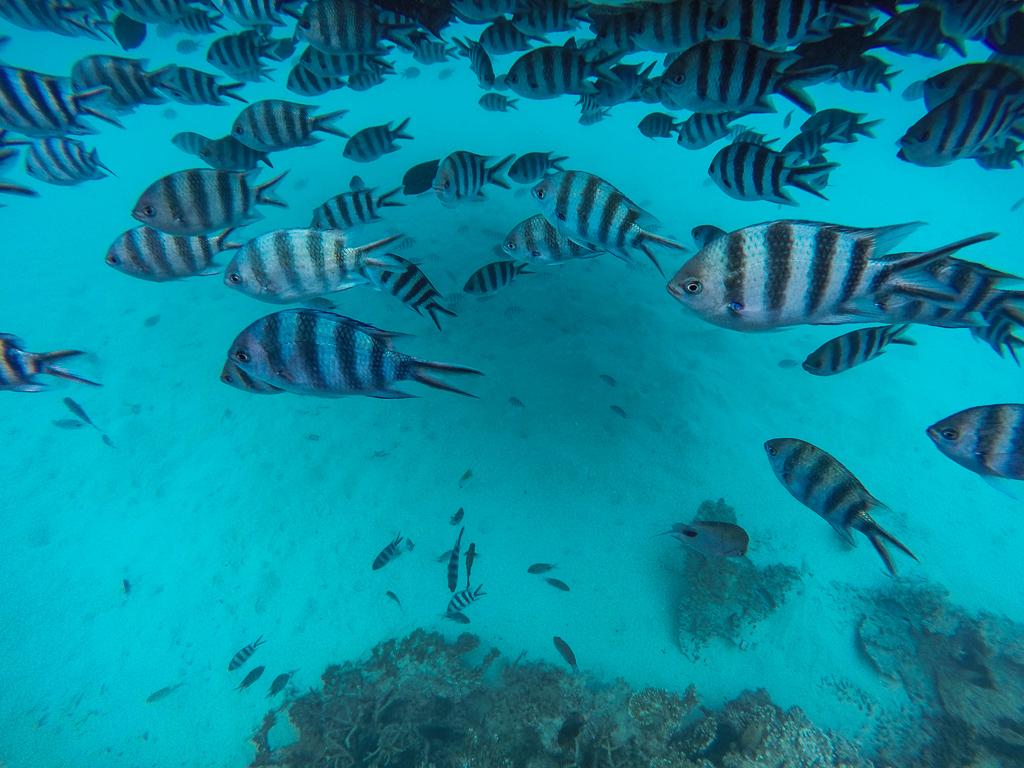 Blue Bay Marine Park, Mauritius