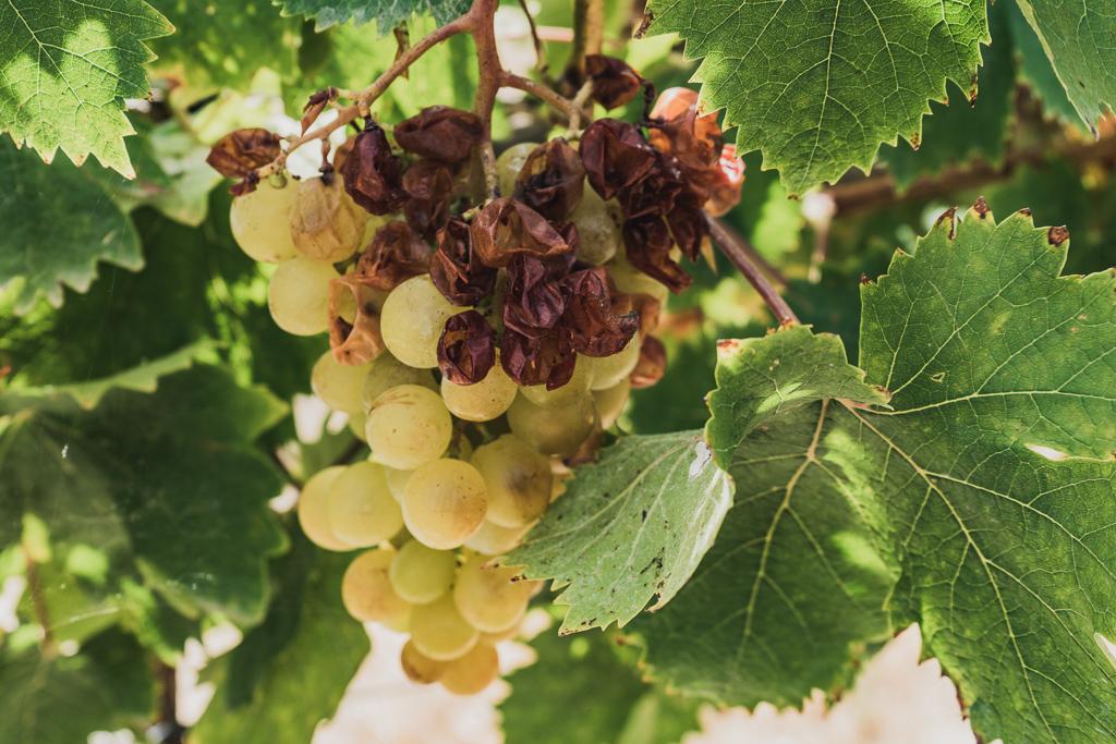 Wine Tasting in Benidorm, Spain