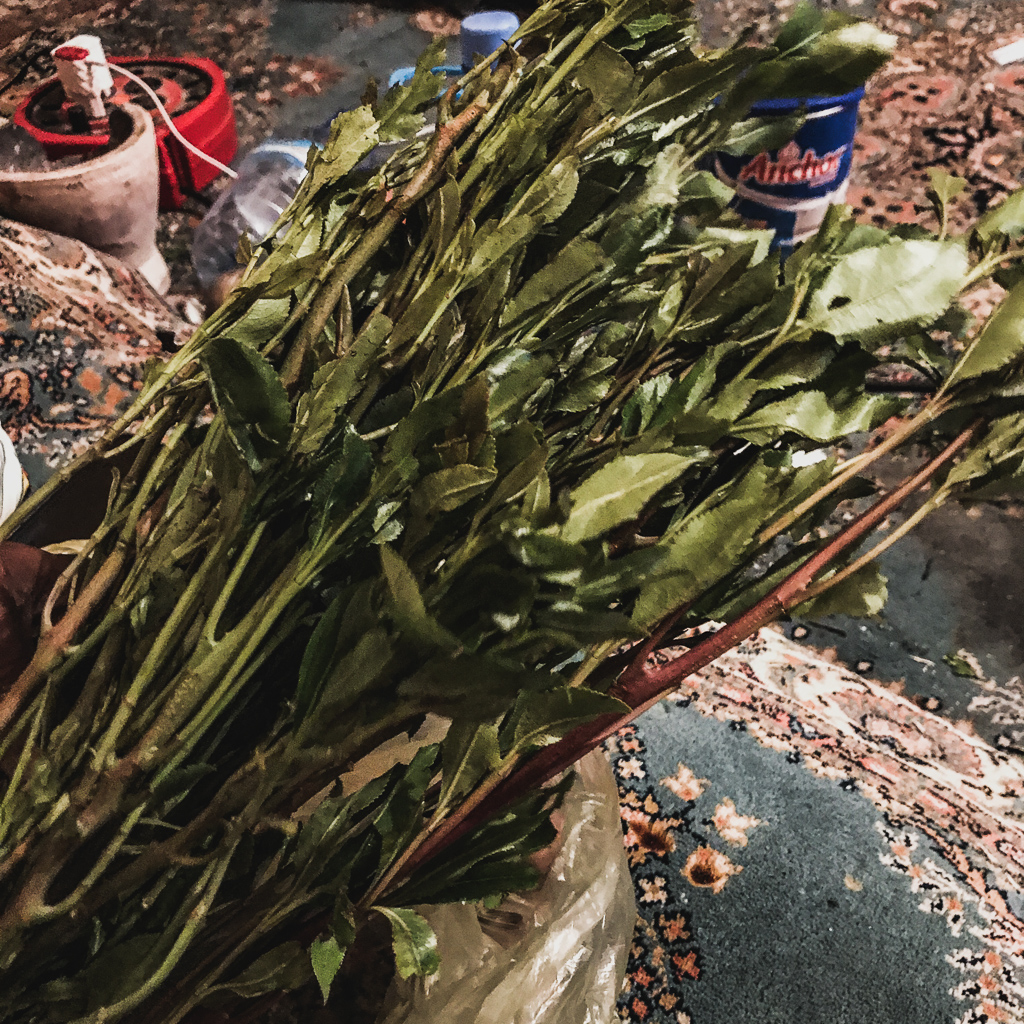 Khat chewing in Somaliland