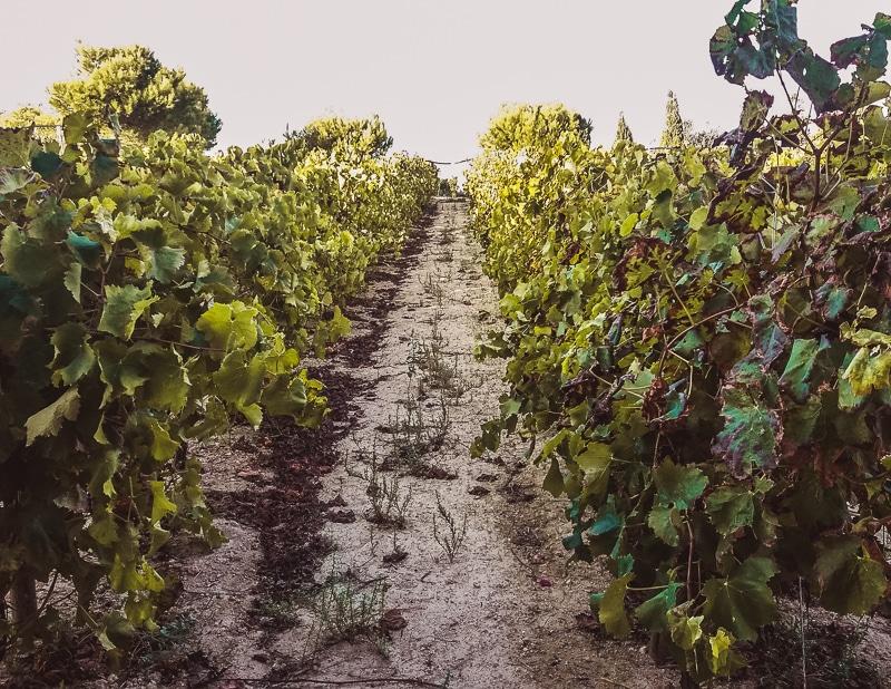 Winery, Gozo, Malta