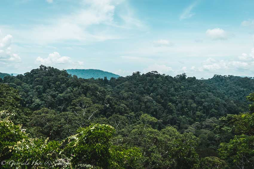 The views from the canopy walk, Ulu Temburong National Park, Brunei.